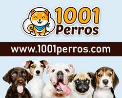 1001perros, mejores perros de compania