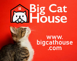 big cat house, cats breed