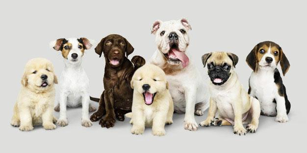 Todas Las Razas De Perros 1001 Perros